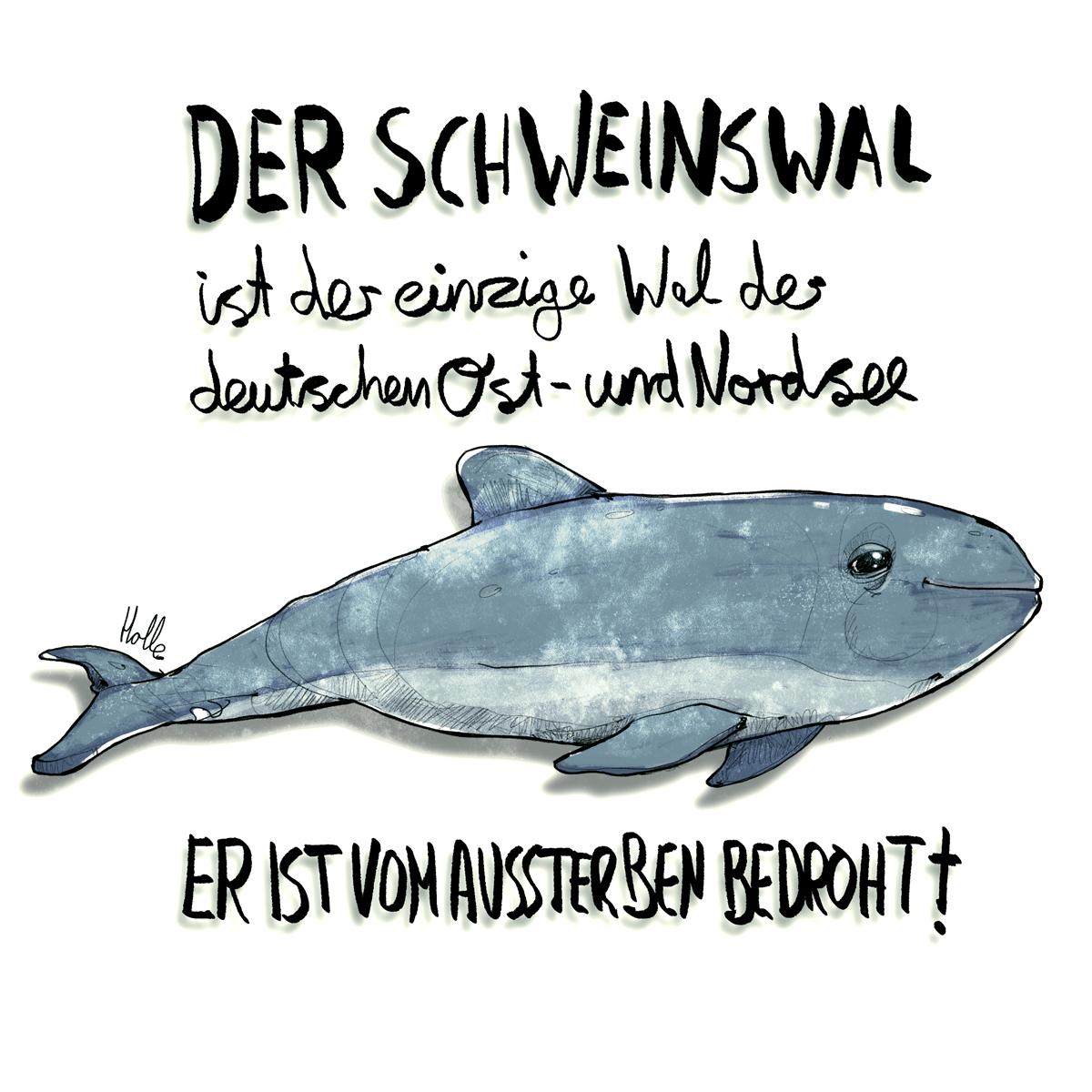 Schweinswal vom Aussterben bedroht