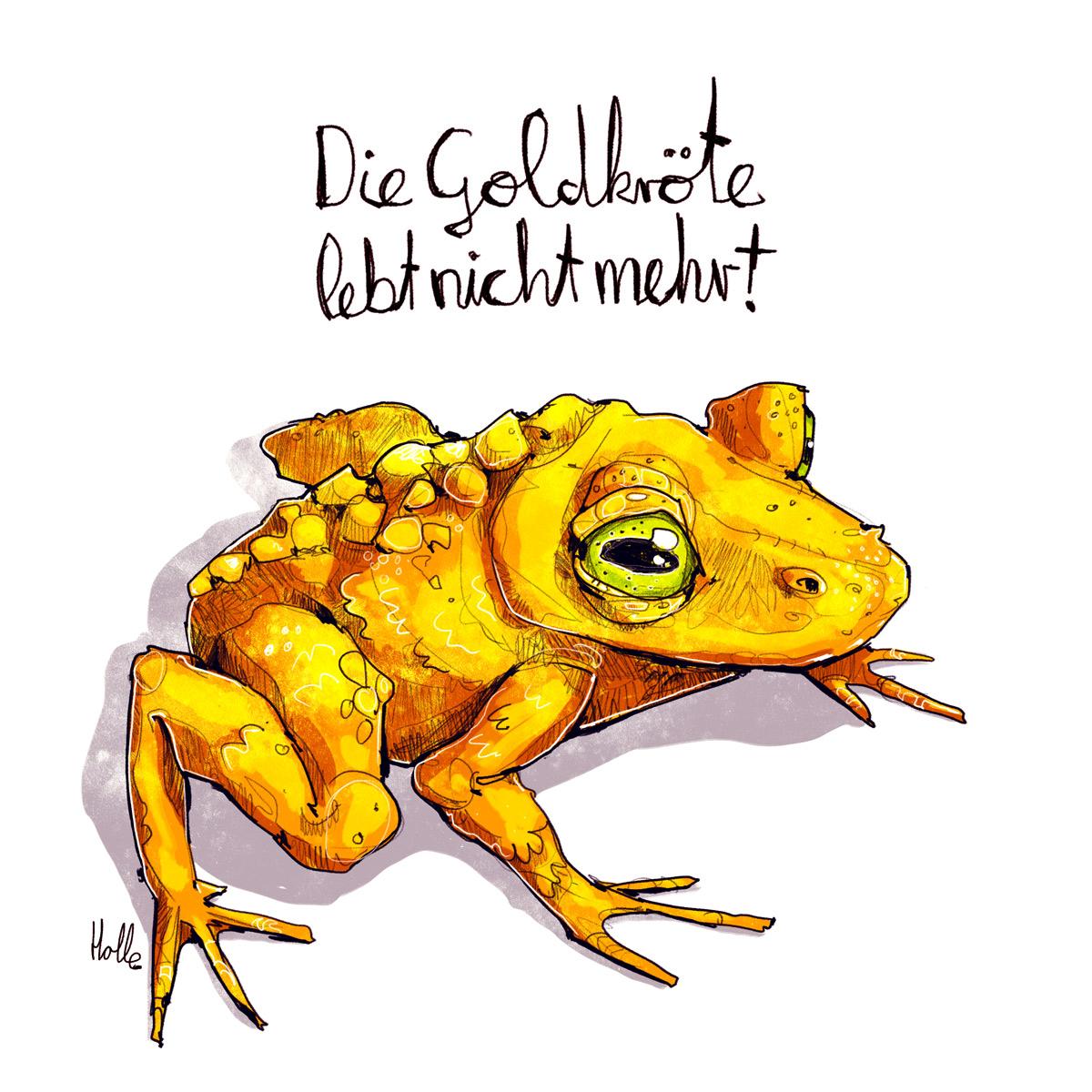 Goldkröte Tierzeichnung Editorial Illustration