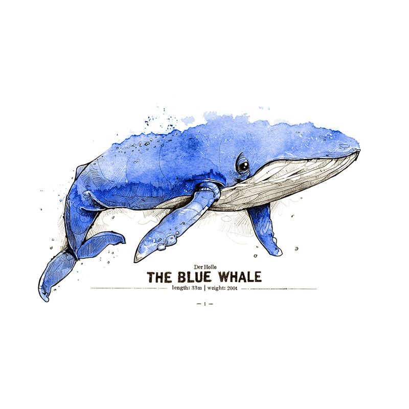 Blauwal Poster Spreadshirt derholle Bonn Aquarell Zeichnung