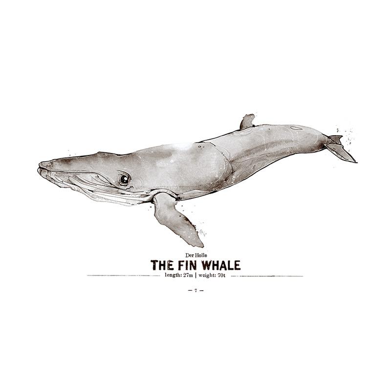 Finnwal Poster Spreadshirt derholle Bonn Aquarell Zeichnung