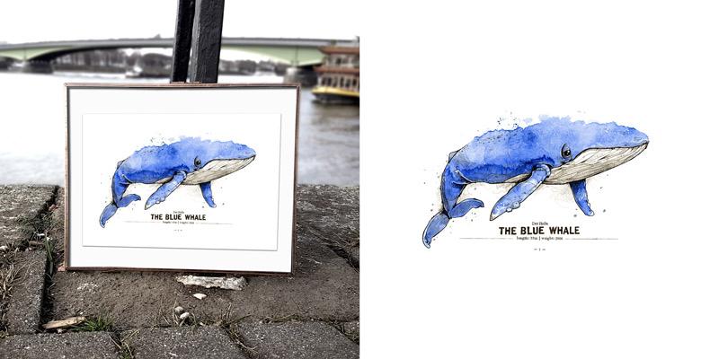 derholle-news-spreadshirt-poster-bonn-blauwal