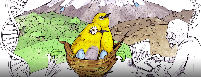 Brillenvogel Wissenschaftsillustration