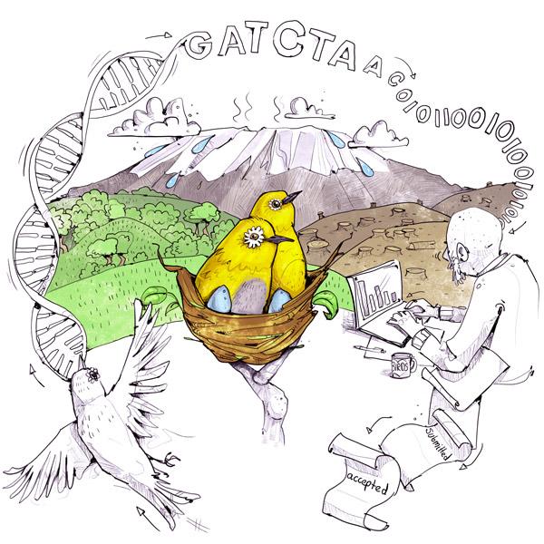 Wissenschaftsillustration Brillenvogel