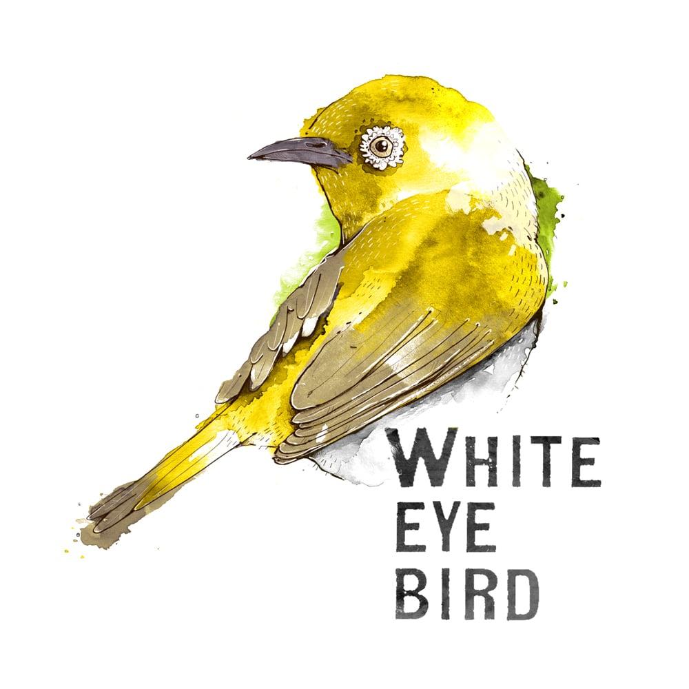 Brillenvogel