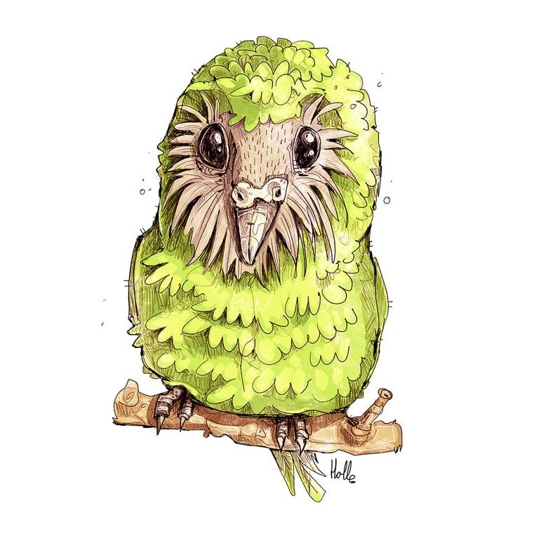 Kakapo T-Shirt Motiv