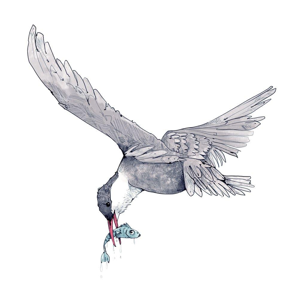 Tierillustrationen Weißbartschwalbe